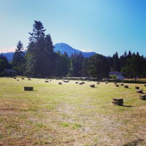 Lots of hay from our 2.5 acre hay field with Mount Prevost in the background. #dancingdandelionfarms #farmlife #hay #grassfed #cow #organic #farming #agriculture #local #duncan #vanisle #vancouverisland #cowichanvalley